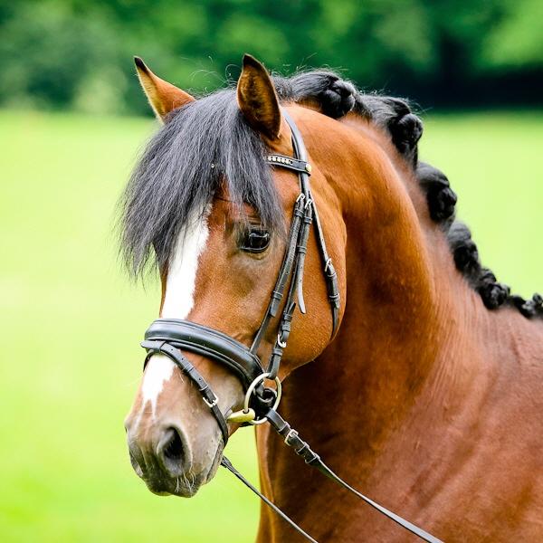 pferde in mv